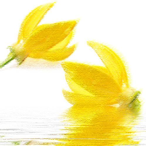 Essencia Tradicional Ylang Ylang 100ml 010071