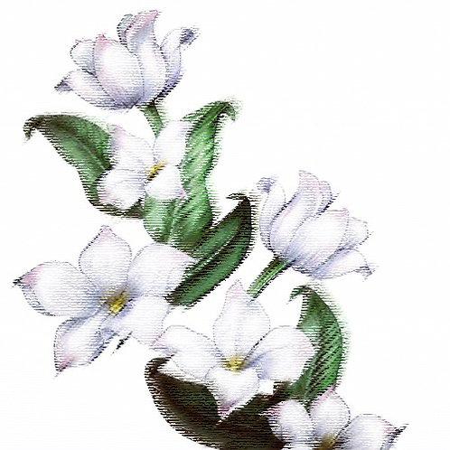 Essencia Tradicional Jasmin Floral- 010140