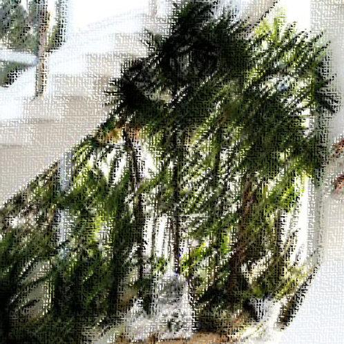 Essencia Jardim de Inverno Tradicional 100ml 010195