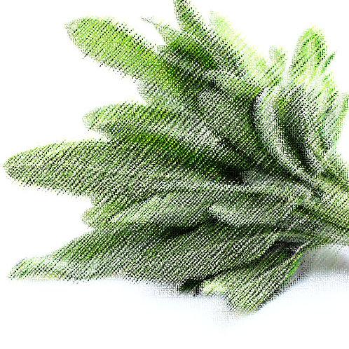 Essencia Salvia Tradicional 100ml 010281