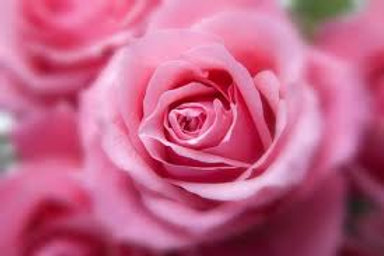 Essencia Rose MM Silver- 380125