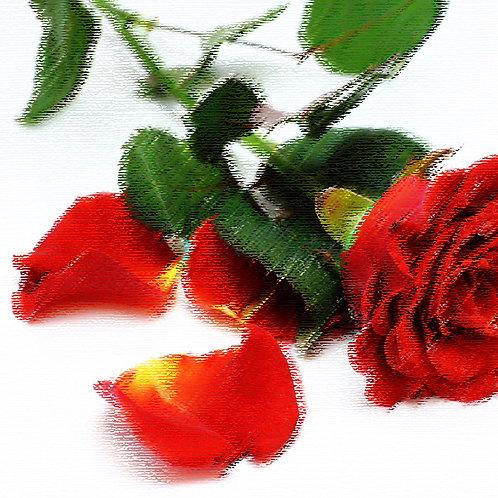 Essencia Tradicional Petalas de Rosas 100ml 010169