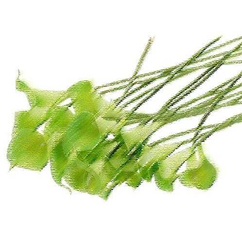 Essencia Tradicional Lirio Verde 100ml 010093