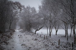 Snowy Whixall