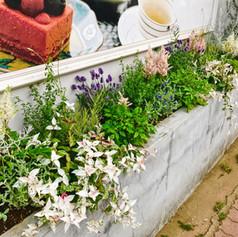 花壇の季節植え替え