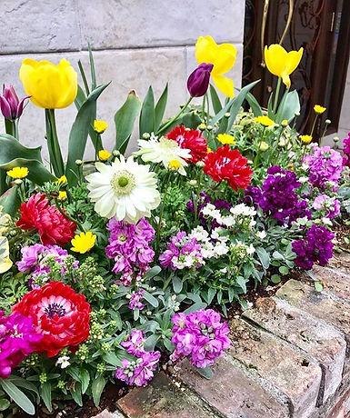 そろそろチューリップの蕾が出始める良い時期ですね〜🌷華やかな花は元気になります