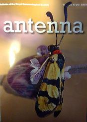 Antenna.jpg