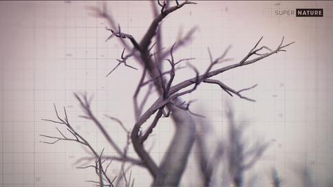 Extrait VFX tree.png