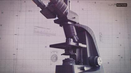 extrait VFX microscope.png
