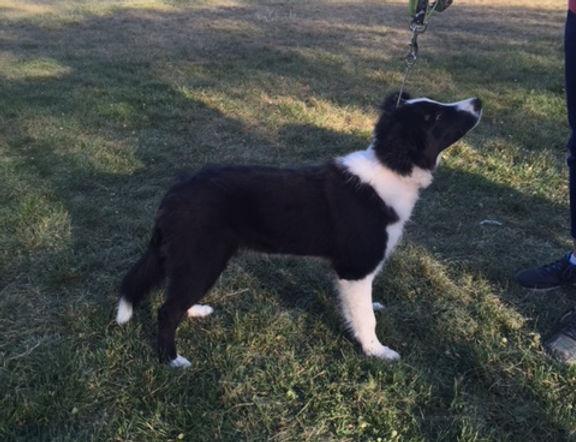 Embrace's Journey To Aspire Gladwyn - puppy