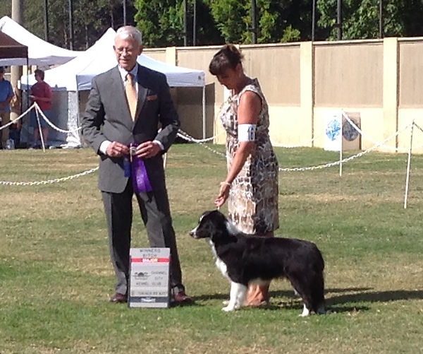 GCh Dvlstr Sunshine Gladwyn Embrace The Journey - major win
