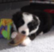 Embrace the Wonderland - puppy