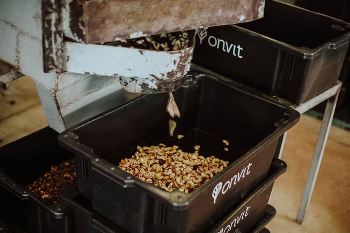 Amêndoas de castanha de caju // Cashew nut kernels