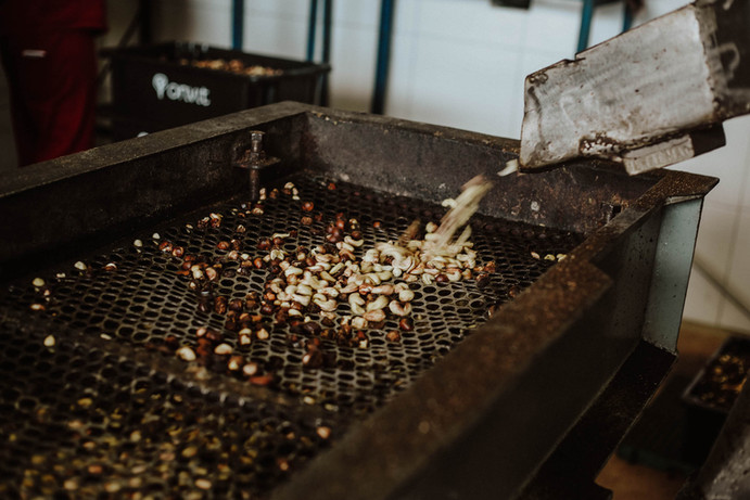 Castanhas de caju // Cashew nuts