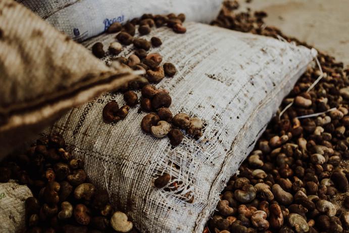 Castanha de caju // Cashew nut