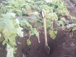 有機農家は冬、もぐらになるのです