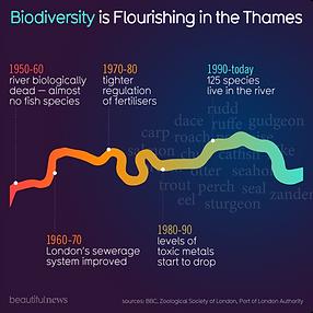 144-biodiversity-river-thames.png