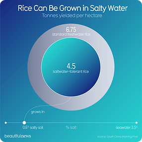 Rice can be grown in salty water