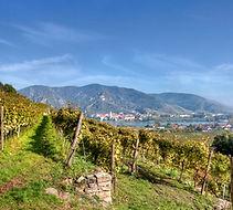 Vineyard Image.jpg