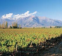 casablanca-wine-valley-in-chile.jpg