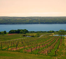New York Finger Lakes.jpg