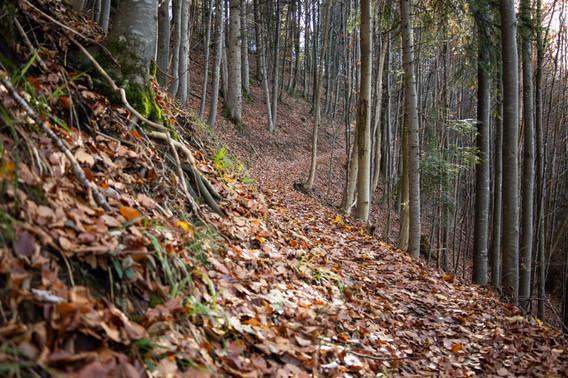 Trail auf den Groot