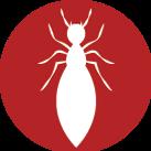 Termite Control Near Me