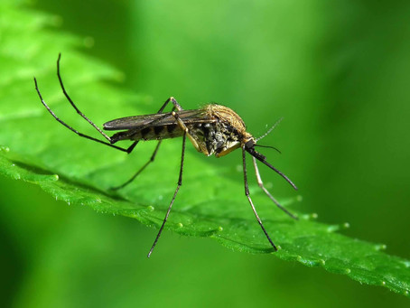 What Everybody Ought to Know About Mosquitoes and Moisture!