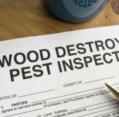 Termite Letter