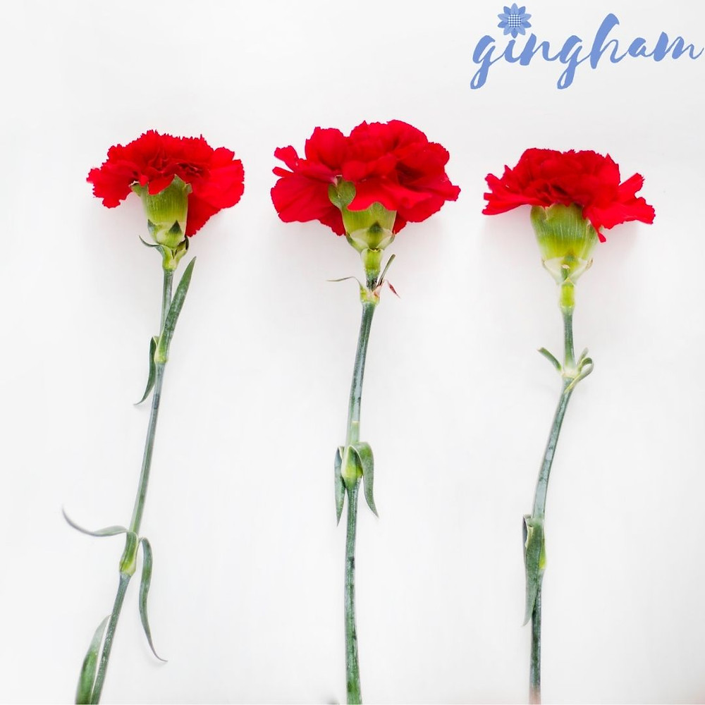 How to get carnations to open