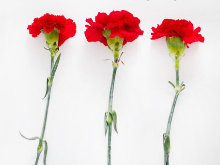 Getting your carnations to open