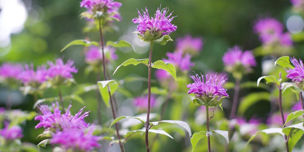 Plant Medicine 101 w/ Shyla FREE  (1)