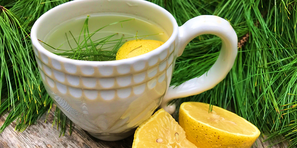 Herbs for Winter Health: A Healer in Every Home