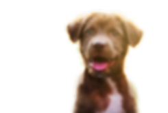 happy%20brown%20puppy_edited.png