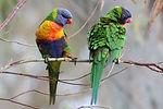 Birds of South Australia