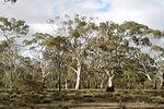 Bird Habitats in South Australia