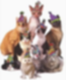 Cat Party pic.png