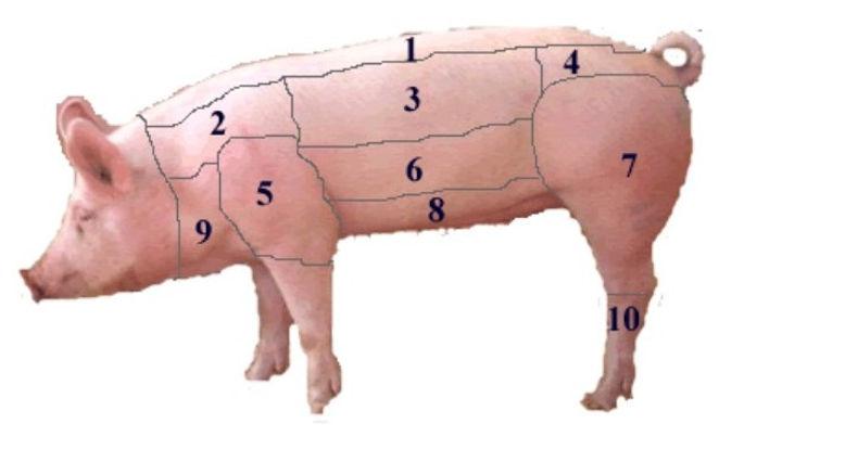 maiale diviso con numeri.jpg