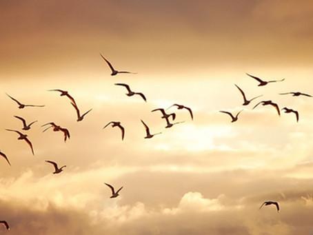 Criar para volar a pesar del viento en contra