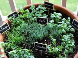 On The Calendar: Houseplant Appreciation Day