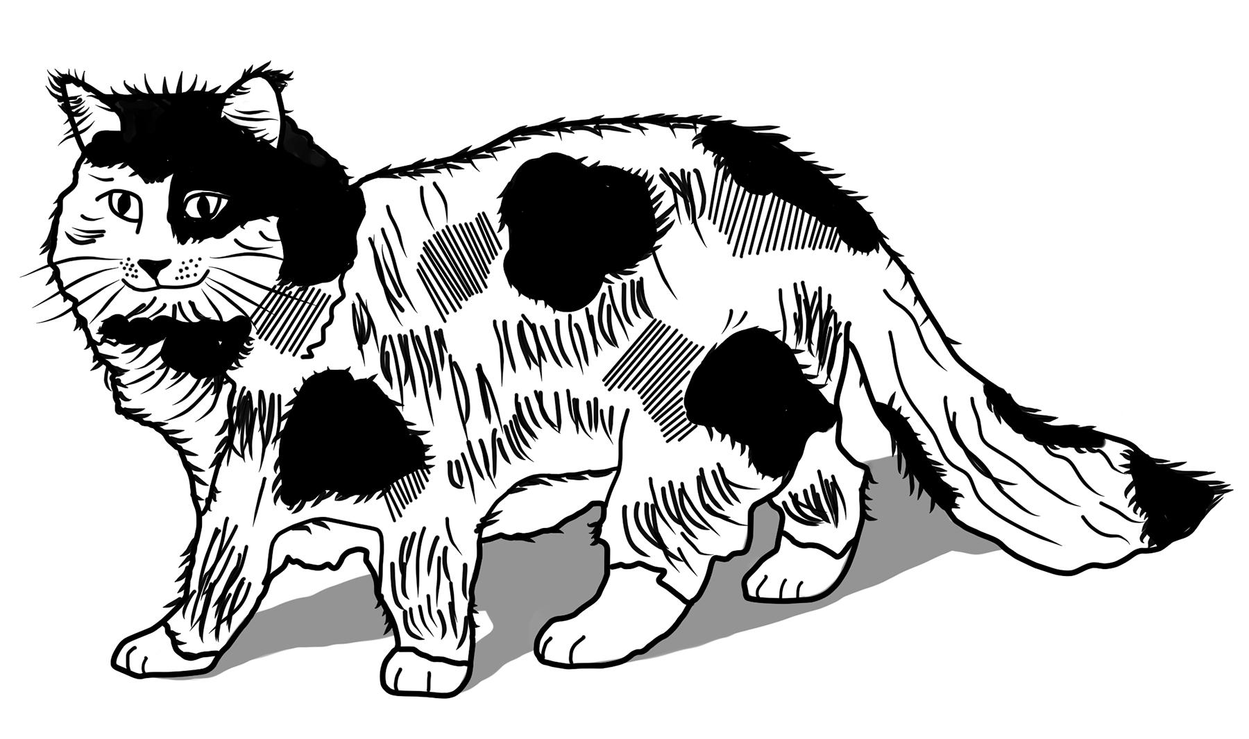 cat.tif