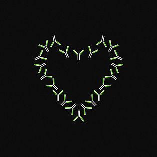 Антитела3.jpg
