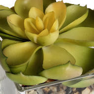 Miniature Succulent in Glass Pot