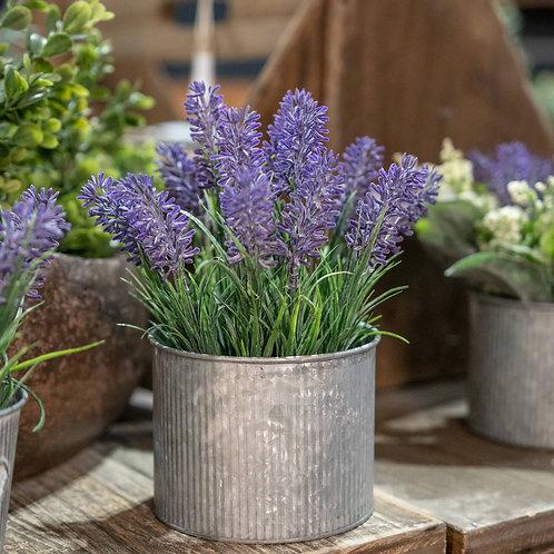 Lavender In Mini Dolly Tin