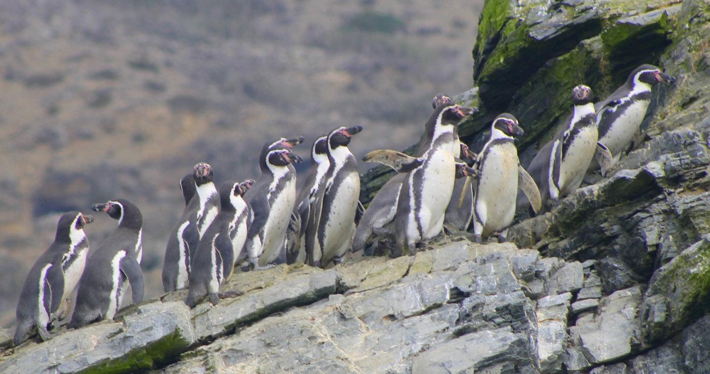 Experiencia Pingüino de Humboldt