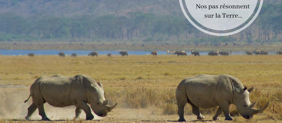 Le Rhinocéros : «Nos pas résonnent sur la Terre...»