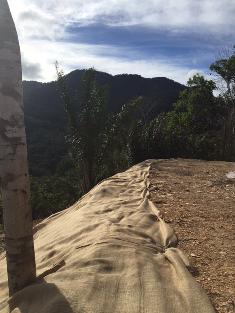 SLOPE PROTECTION - The Natural, Eco-friendly way (PART 1)