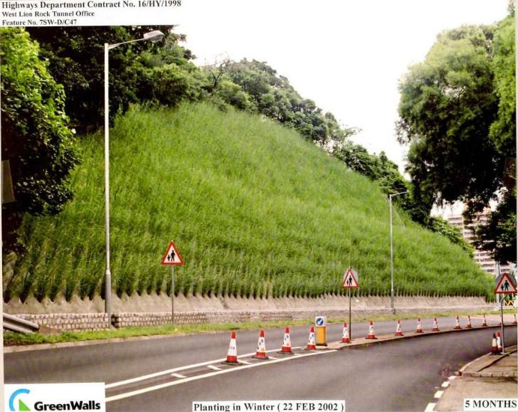 A good example of Vetiver grass in slope stabilisation along a highway in Malaysia
