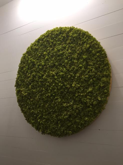 Moss wall decor - Mosses naturally remove moisture from the air acting like a dehumidifier.