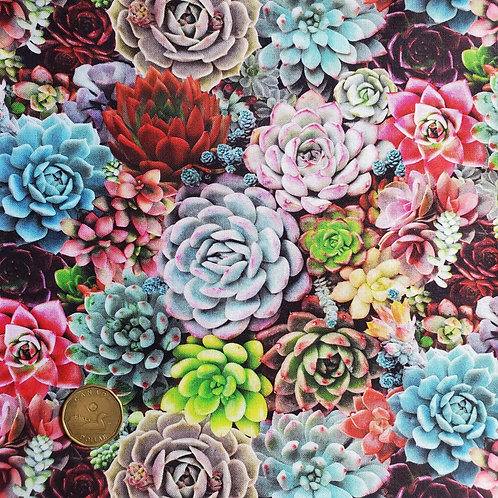 Flared Pad: Large Succulents